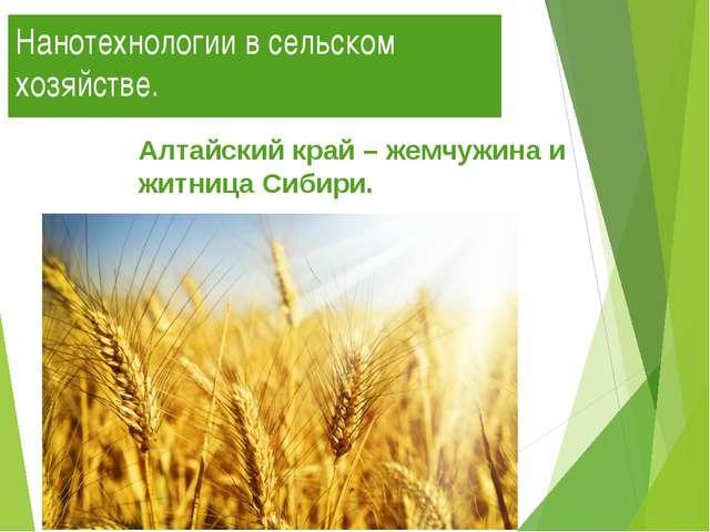 Нанотехнологии в сельском хозяйстве. Алтайский край – жемчужина и житница Сиб...