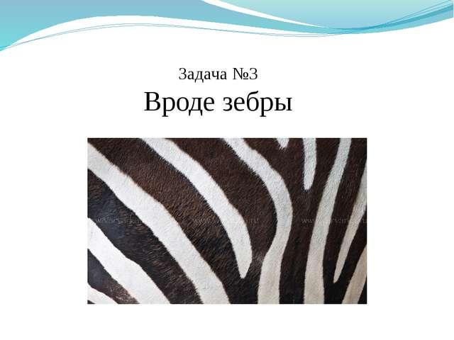 Задача №3 Вроде зебры