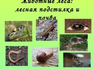 Животные леса: лесная подстилка и почва