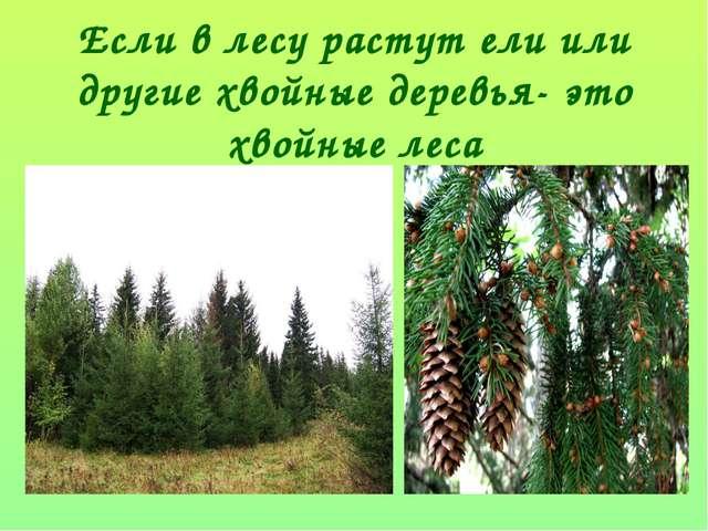 Если в лесу растут ели или другие хвойные деревья- это хвойные леса
