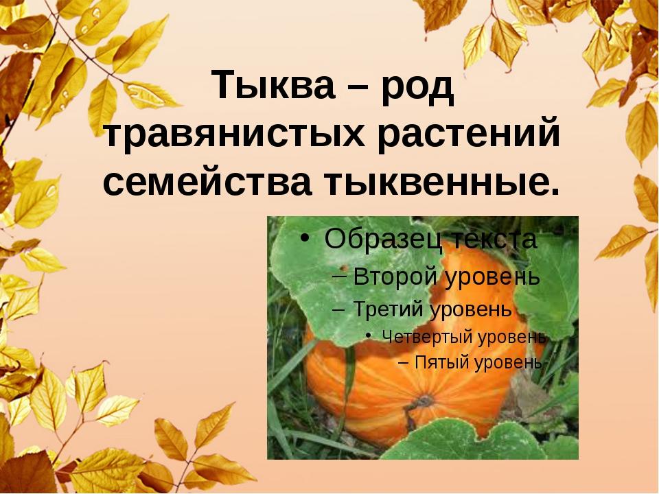 Тыква – род травянистых растений семейства тыквенные.