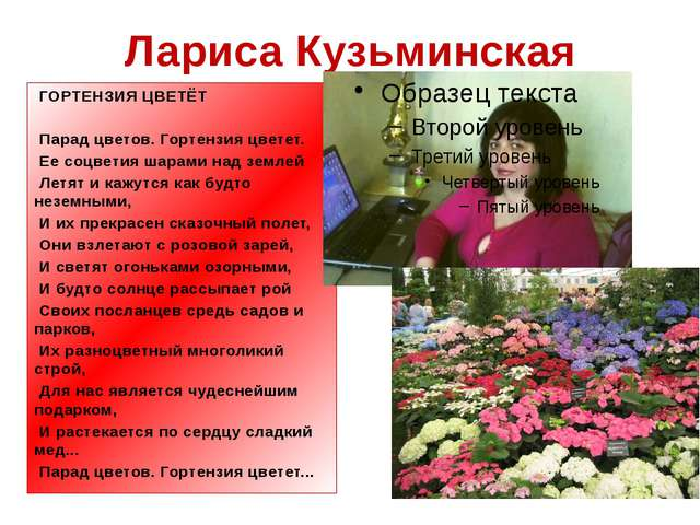 Лариса Кузьминская ГОРТЕНЗИЯ ЦВЕТЁТ Парад цветов. Гортензия цветет. Ее соц...