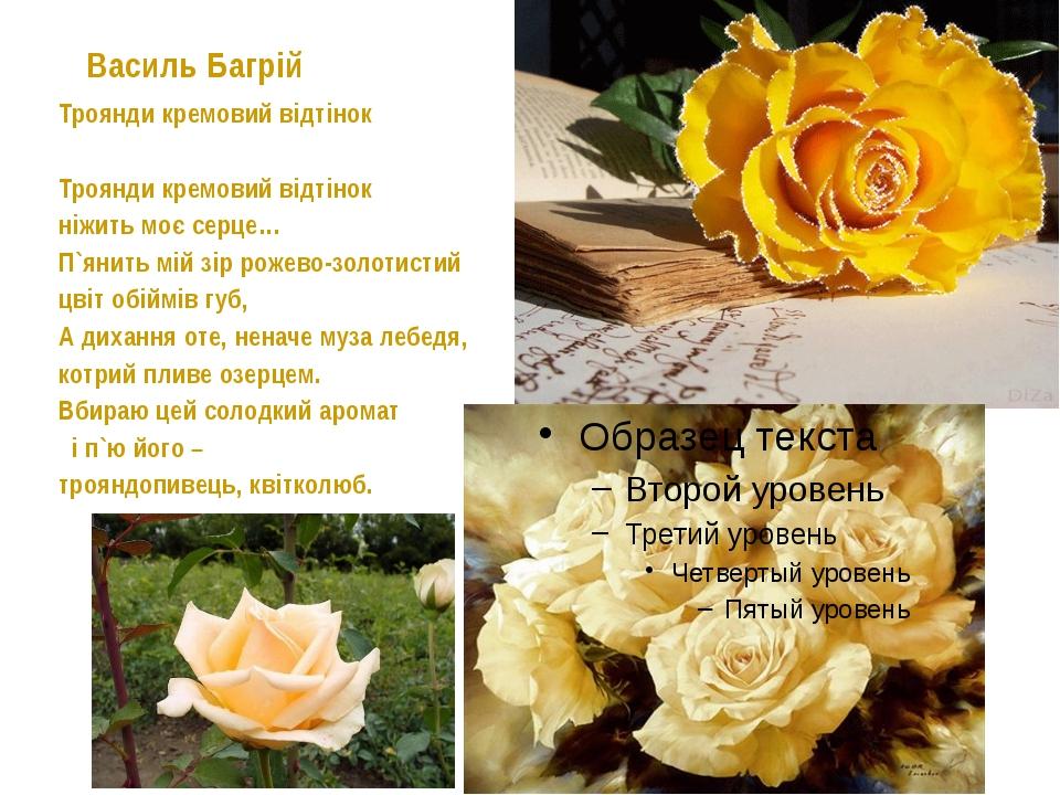 Василь Багрій Троянди кремовий відтінок Троянди кремовий відтінок ніжить м...