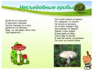 Несъедобные грибы Какой же он хороший! И шапочка в горошек! Растёт повсюду он