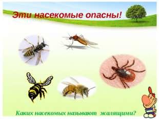 Эти насекомые опасны! Каких насекомых называют жалящими? Каких насекомых назы