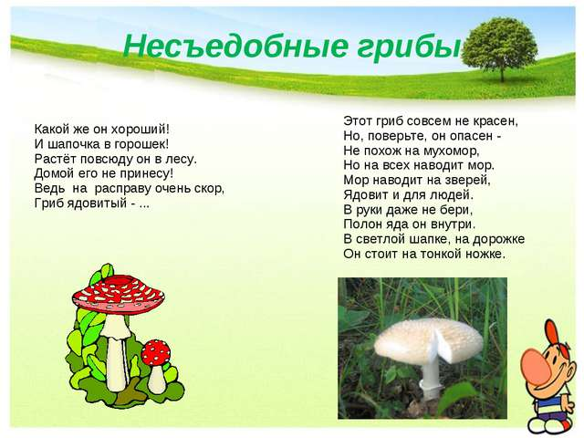 Несъедобные грибы Какой же он хороший! И шапочка в горошек! Растёт повсюду он...