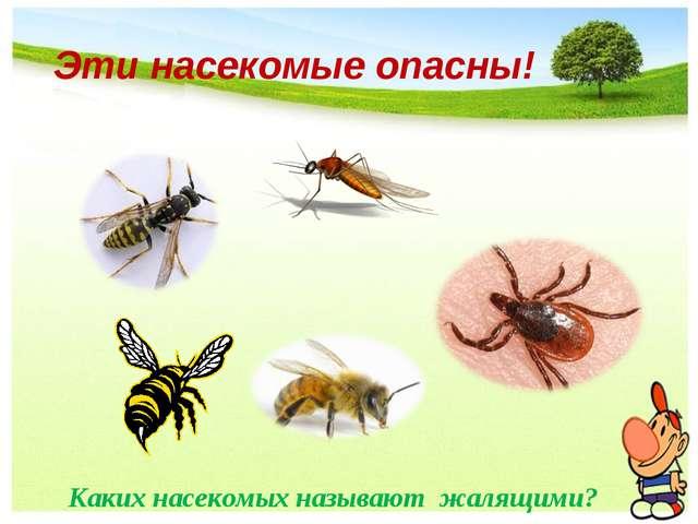 Эти насекомые опасны! Каких насекомых называют жалящими? Каких насекомых назы...