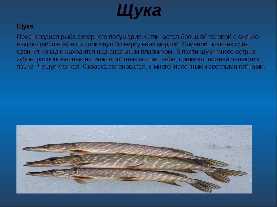 Щука Щука Пресноводная рыба северного полушария. Отличается большой головой с...