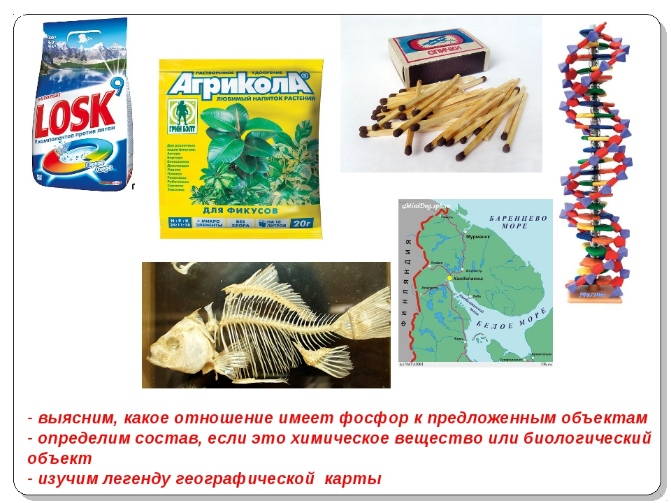 - выясним, какое отношение имеет фосфор к предложенным объектам - определим...