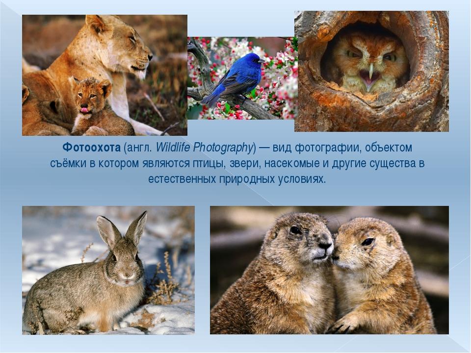 Фотоохота (англ.Wildlife Photography)— вид фотографии, объектом съёмки в ко...