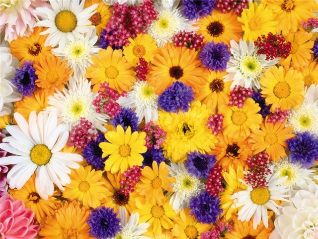 Amazing Colorful Flowers Wallpapers All Flowers Send Flowers Comments Send Online Flowers