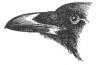 http://rudocs.exdat.com/pars_docs/tw_refs/288/287607/287607_html_6ead369d.png