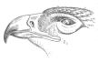 http://rudocs.exdat.com/pars_docs/tw_refs/288/287607/287607_html_m3c986fe7.png