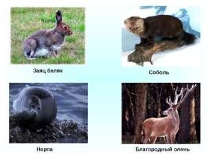 Нерпа Благородный олень Соболь Заяц беляк