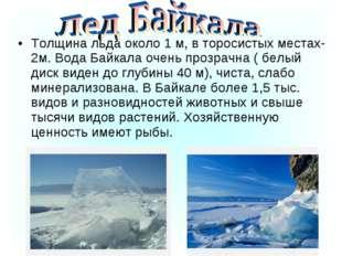 Толщина льда около 1 м, в торосистых местах-2м. Вода Байкала очень прозрачна