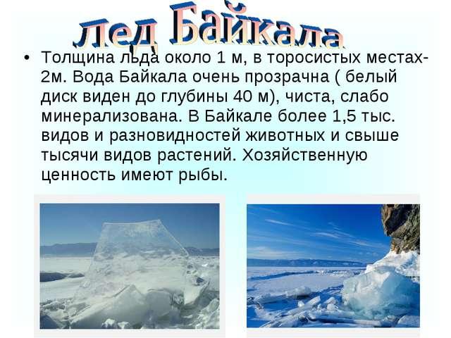 Толщина льда около 1 м, в торосистых местах-2м. Вода Байкала очень прозрачна...