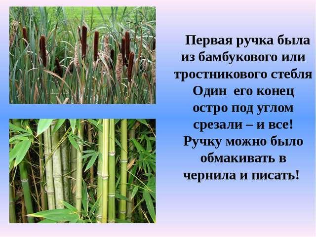 Первая ручка была из бамбукового или тростникового стебля Один его конец ост...