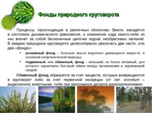 Фонды природного круговорота Процессы, происходящие в различных оболочках Зем