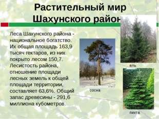 Растительный мир Шахунского района Леса Шахунского района - национальное бога