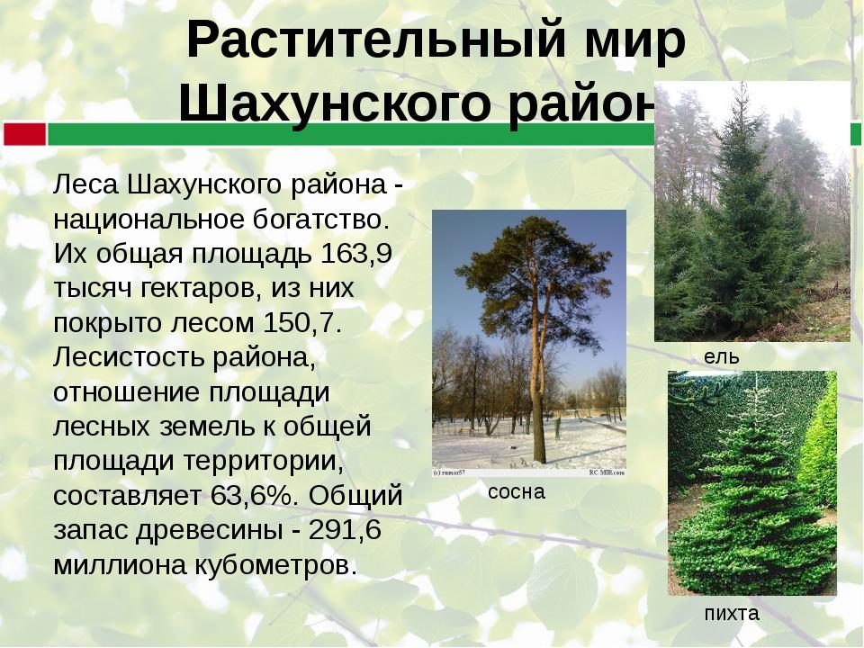 Растительный мир Шахунского района Леса Шахунского района - национальное бога...