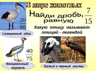Какую птицу называют птицей - легендой