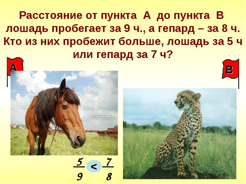Расстояние от пункта А до пункта В лошадь пробегает за 9 ч., а гепард – за 8...