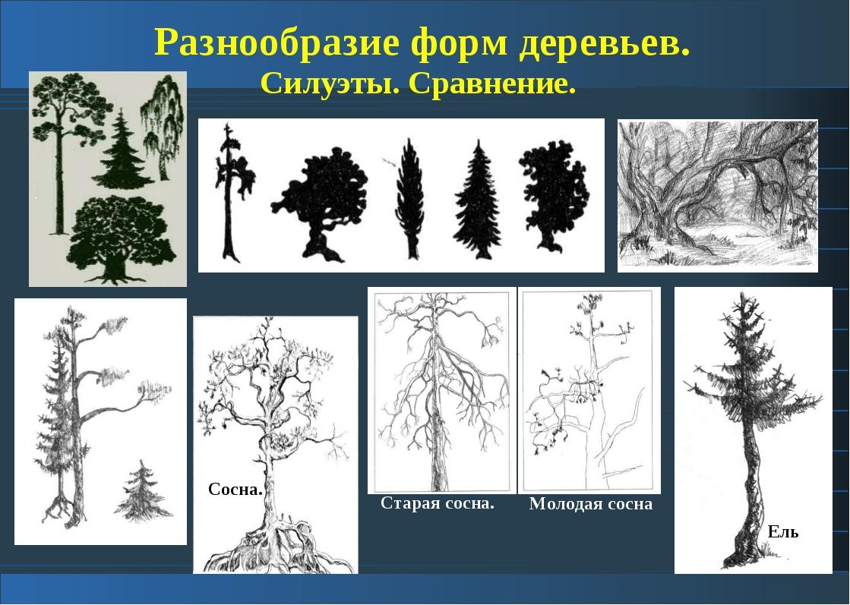 Разнообразие форм деревьев. Силуэты. Сравнение. Старая сосна. Молодая сосна...
