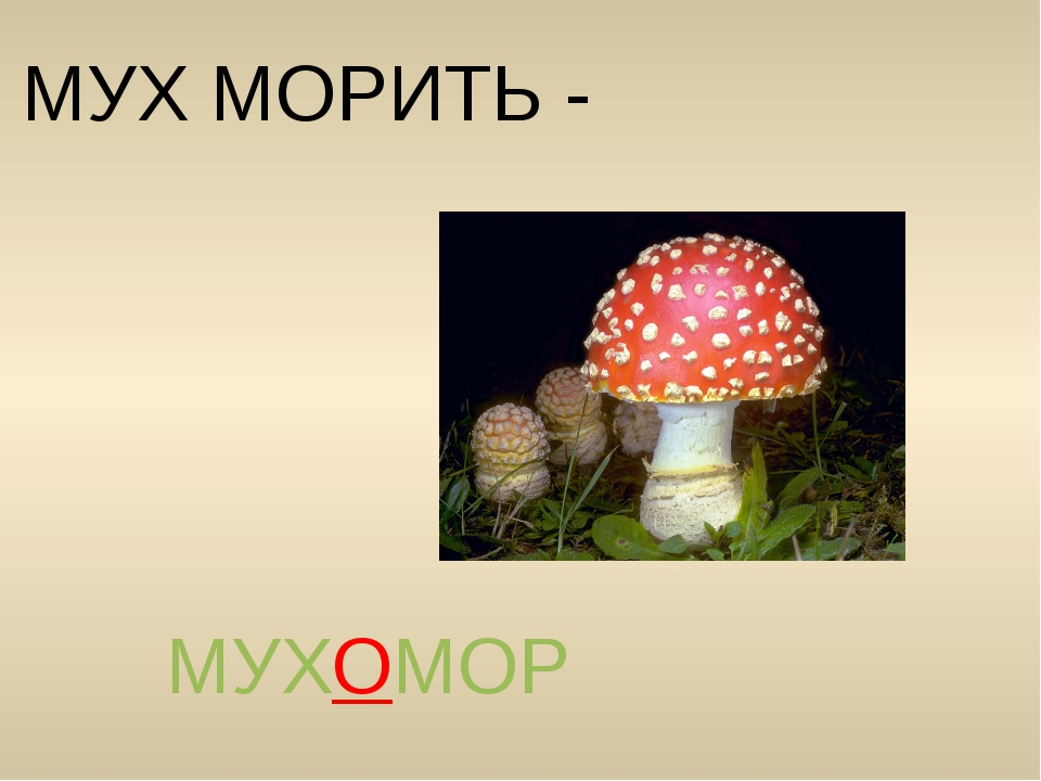 МУХ МОРИТЬ - МУХОМОР