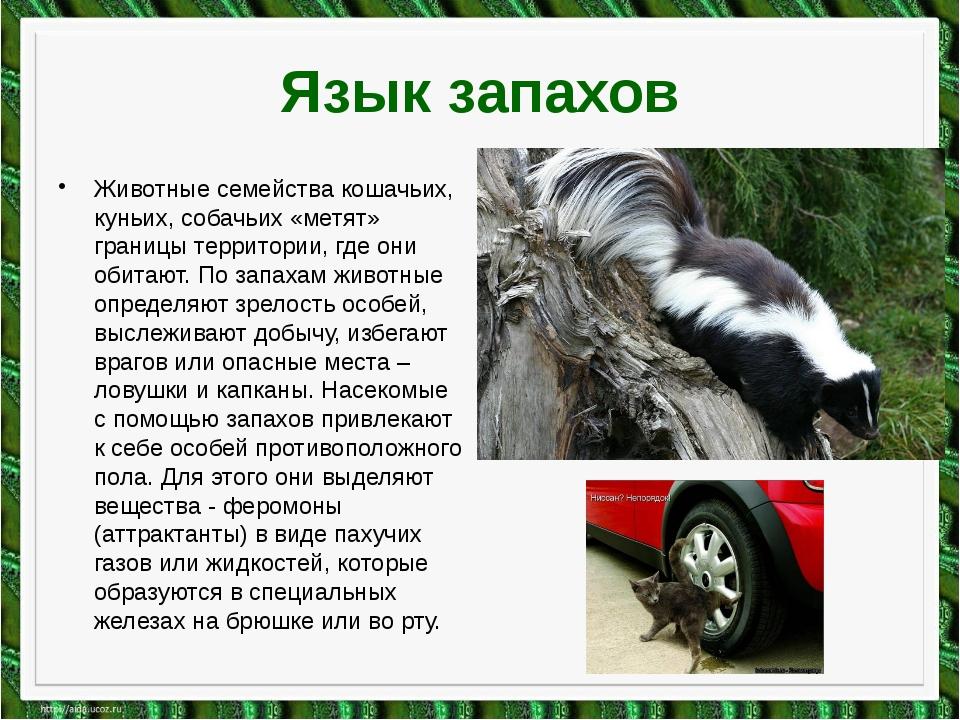 Язык запахов Животные семейства кошачьих, куньих, собачьих «метят» границы те...