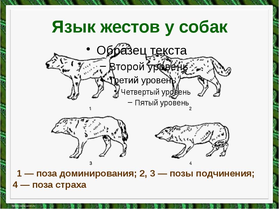Язык жестов у собак 1 — поза доминирования; 2, 3 — позы подчинения; 4 — поза...