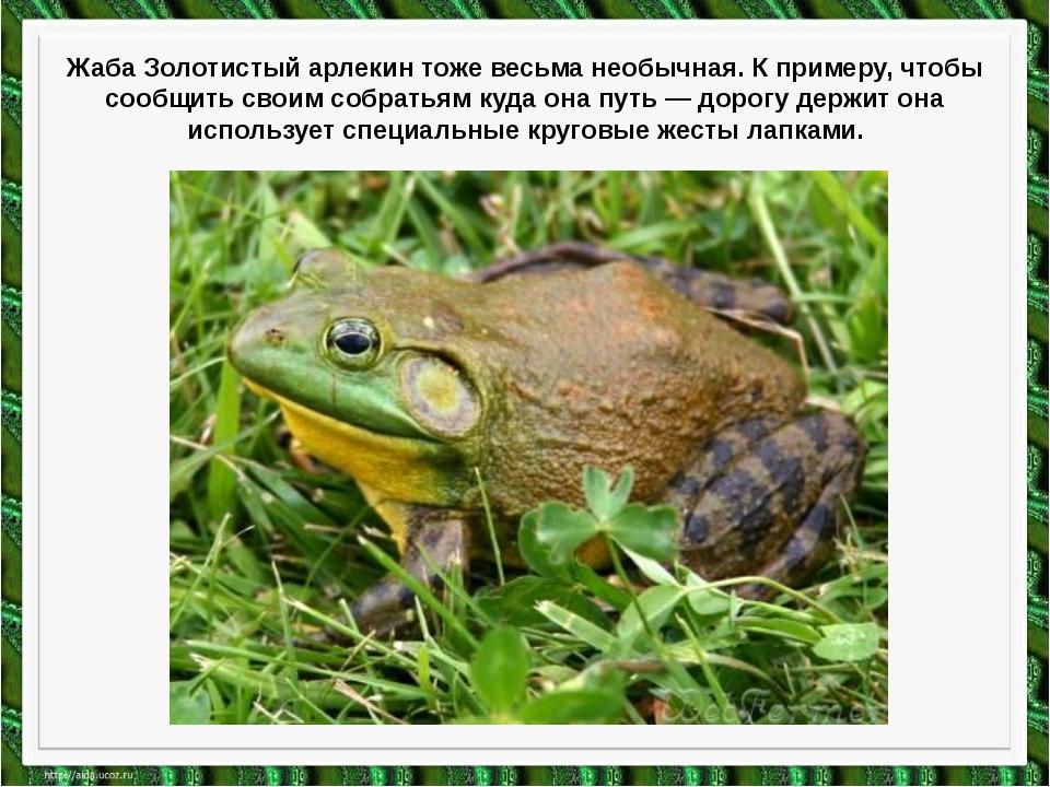 Жаба Золотистый арлекин тоже весьма необычная. К примеру, чтобы сообщить свои...