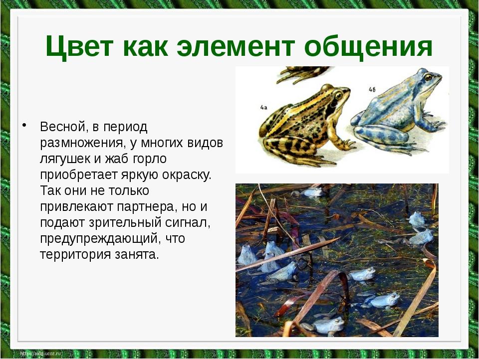 Цвет как элемент общения Весной, в период размножения, у многих видов лягушек...