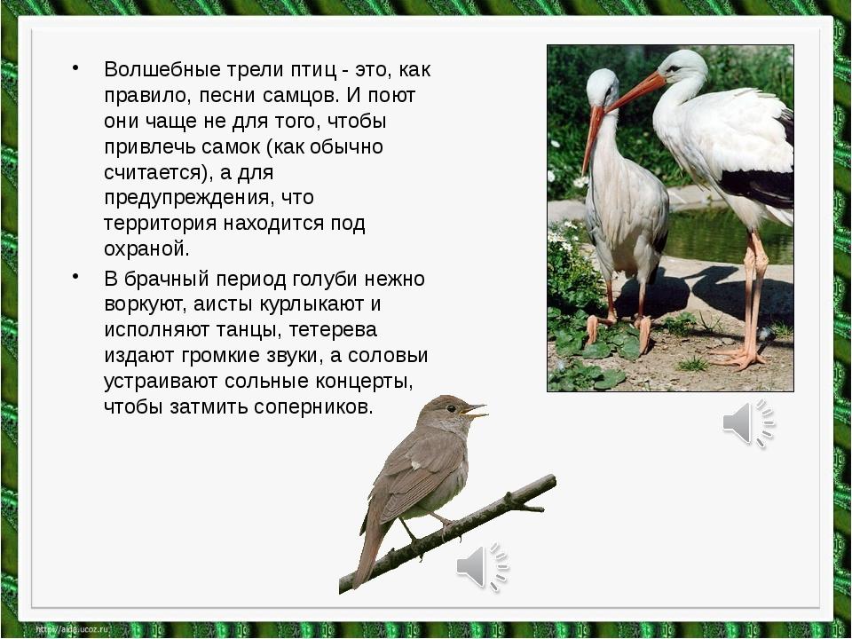 Волшебные трели птиц - это, как правило, песни самцов. И поют они чаще не для...
