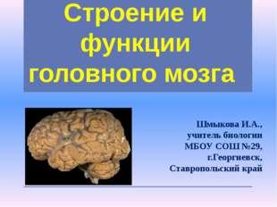 Строение и функции головного мозга Шмыкова И.А., учитель биологии МБОУ СОШ №