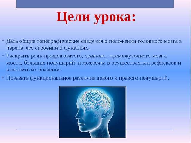 Цели урока: Дать общие топографические сведения о положении головного мозга в...