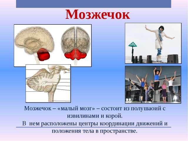 Мозжечок Мозжечок – «малый мозг» – состоит из полушаоий с извилинами и корой....