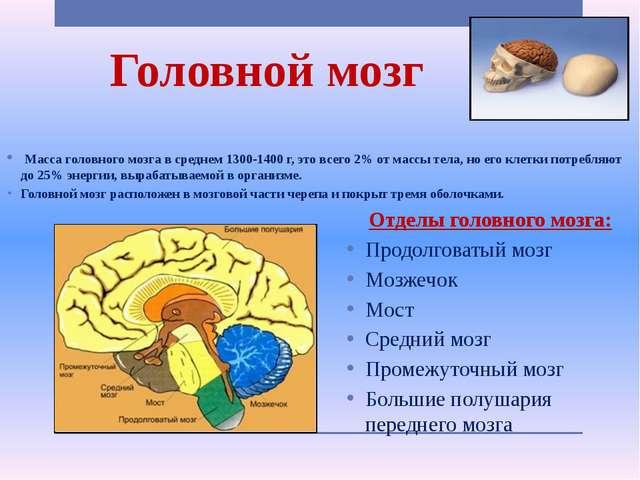Головной мозг Масса головного мозга в среднем 1300-1400 г, это всего 2% от ма...