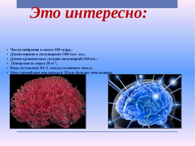 Это интересно: • Число нейронов в мозге-100 млрд.; • Длина нервов в полушария...