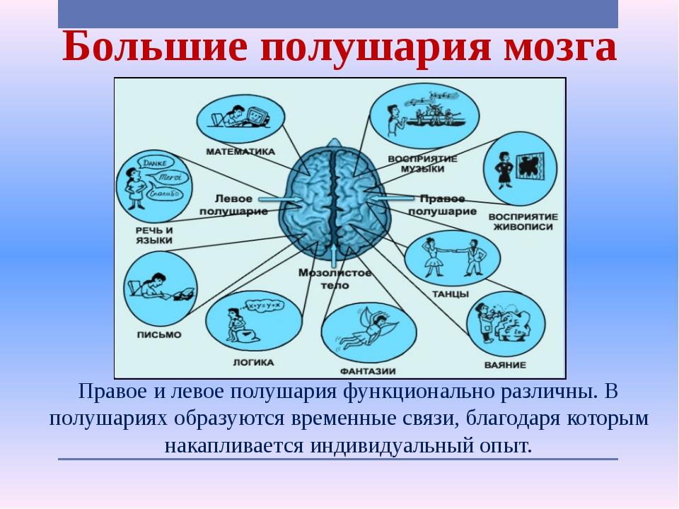 brief brain lateralization theory