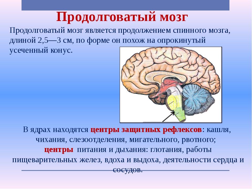 Продолговатый мозг Продолговатый мозг является продолжением спинного мозга, д...