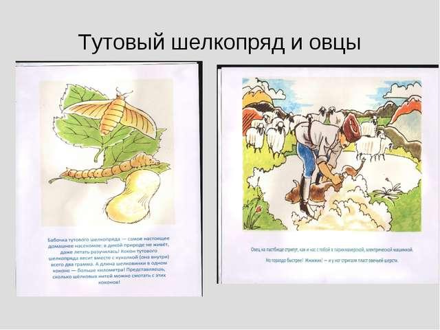 Тутовый шелкопряд и овцы