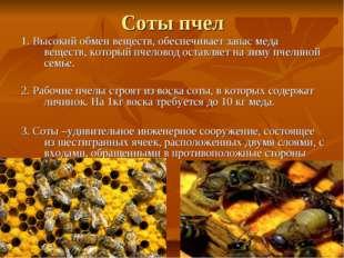 Соты пчел 1. Высокий обмен веществ, обеспечивает запас меда веществ, который