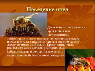 Поведение пчел Деятельность пчел является врожденной или инстинктивной. Инфор