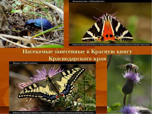 Насекомые занесенные в Красную книгу Краснодарского края