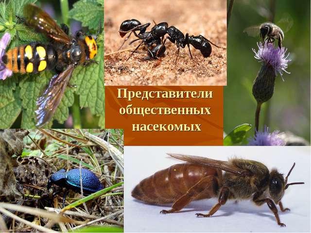 Представители общественных насекомых