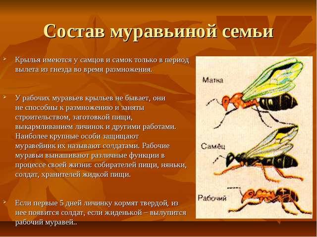 Состав муравьиной семьи Крылья имеются у самцов и самок только в период вылет...
