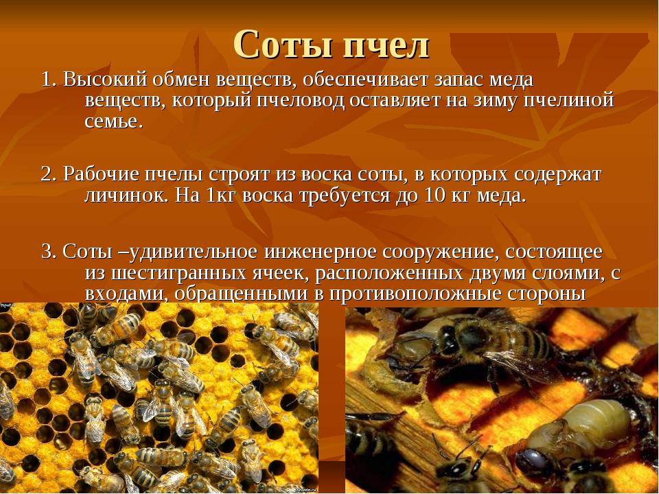 Соты пчел 1. Высокий обмен веществ, обеспечивает запас меда веществ, который...