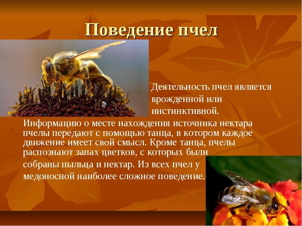 Поведение пчел Деятельность пчел является врожденной или инстинктивной. Инфор...