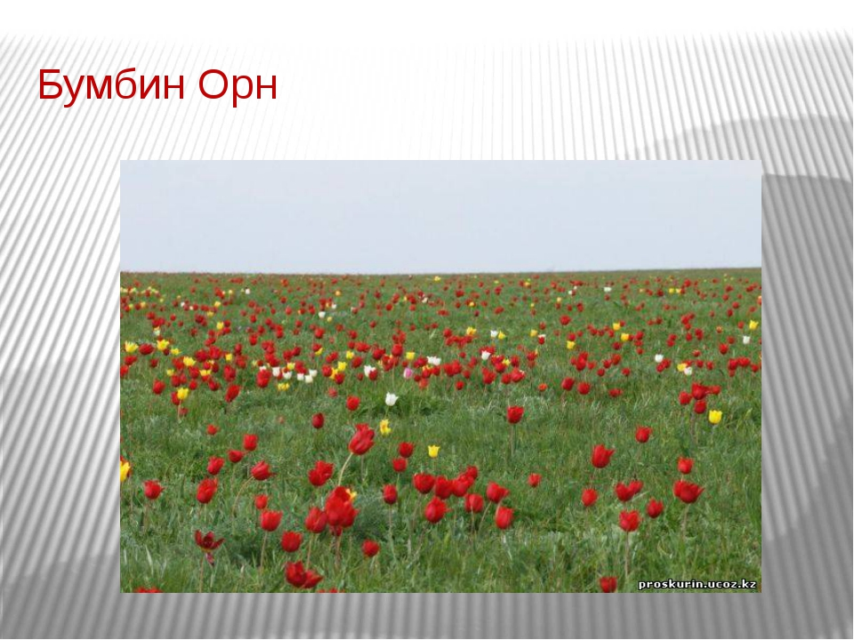 Бумбин Орн