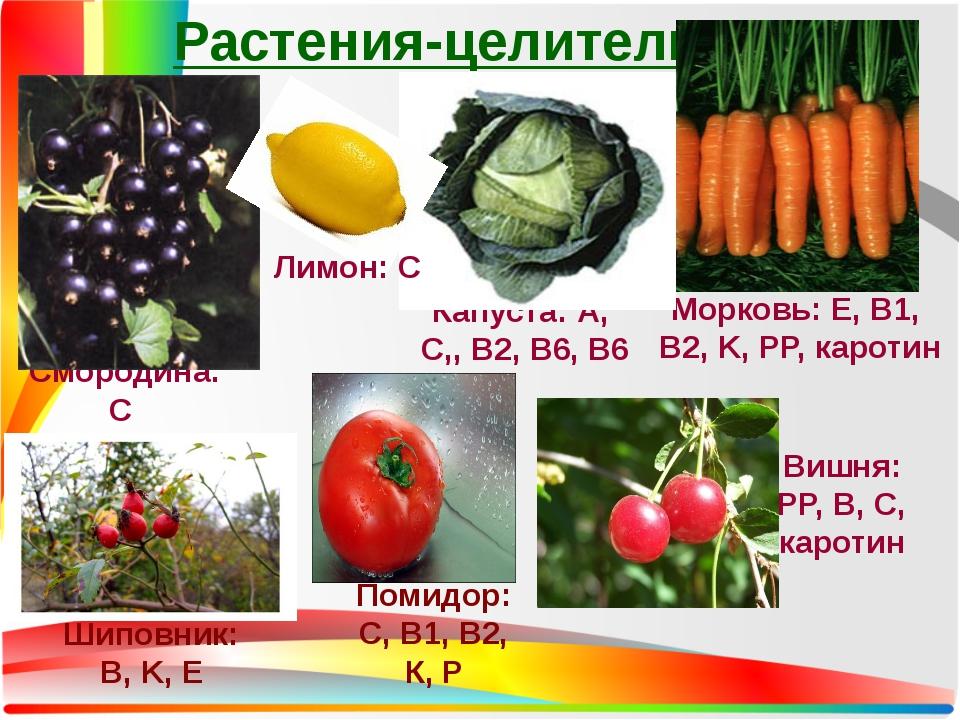 Растения-целители Смородина: С Капуста: А, C,, B2, B6, B6 Морковь: Е, B1, B2,...